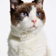 Dori_Cat_Animal_Portrait_Toronto_AdamCoish_Photography_1