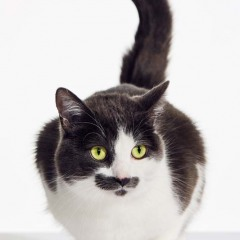 Stache_Cat_Animal_Portrait_Toronto_AdamCoish_Photography_2