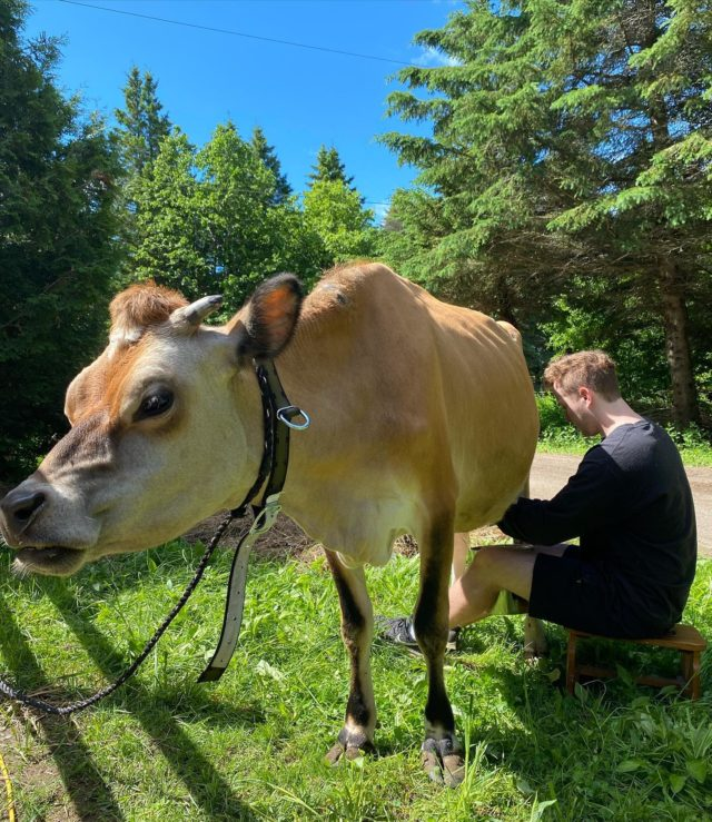 We are so excited to be back in action! Taking bookings for events (within the guidelines outlined) and productions. We are also looking forward to introducing some new rescue/rehab members of our animal team.  Daisy, pictured being milked by Lucas.