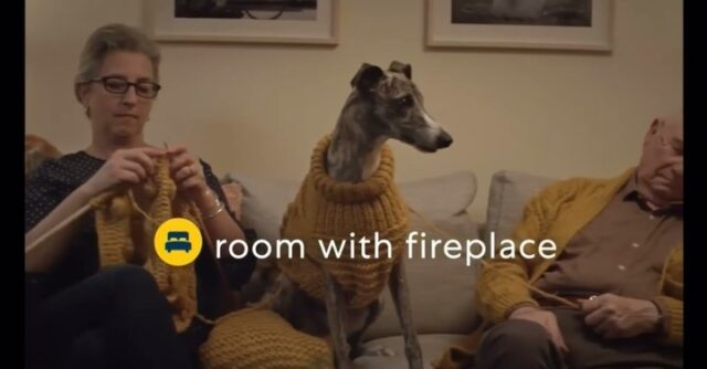 Kiwi staring in his very own commercial for @expedia