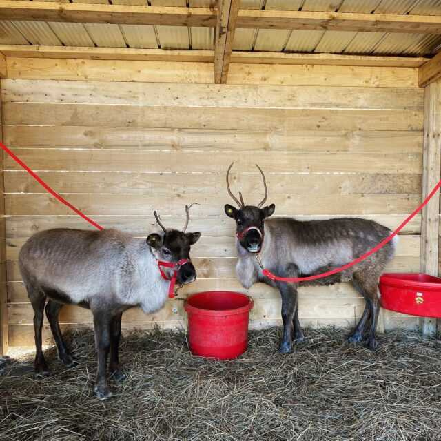 Our Reindeer are open for business! Happy to provide socially distanced events for the holiday season.