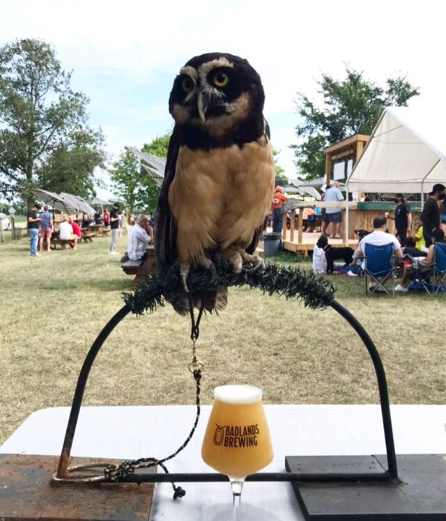 Did you know we do events? Birds of prey, reindeer, alpacas, birds, all of it!   Cleveland, Razor and Caolaidhe @birdershewrote had a great time yesterday at the 4th anniversary party for @badlandsbrewing .   Have a fun idea for an event? Wanting to add a memorable, ethical and educational aspect? Send us a message :)